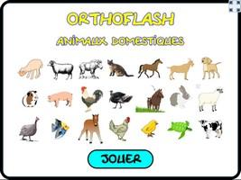 Orthoflash (animaux domestiques)