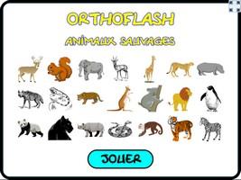 Orthoflash (animaux sauvages)